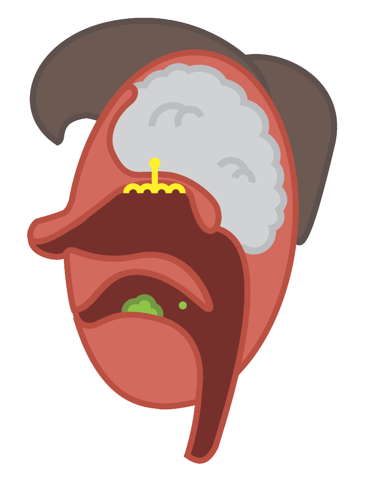 Vapor particles from food leave the mouth and float through the retro nasal canal into the nasal passage.